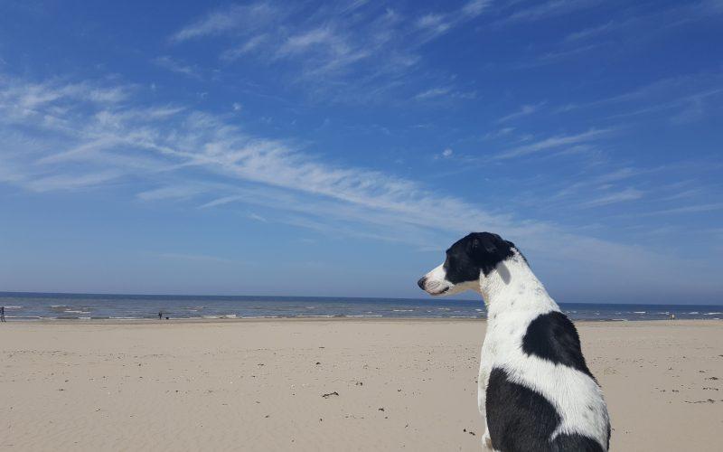 Het hondenbrokkenparadijs